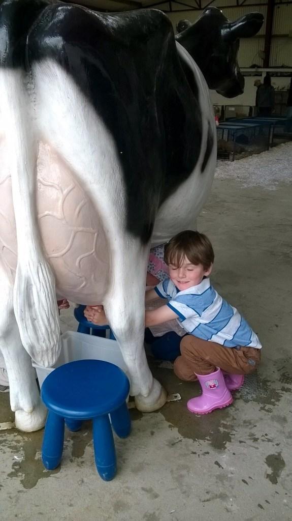 Milking a cow kia ora farm