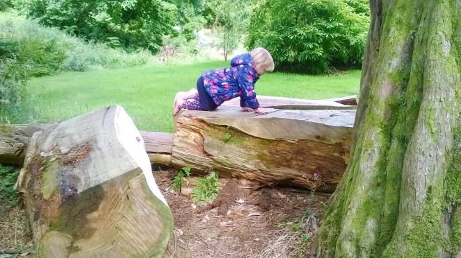 Kilmacurragh Gardens 6