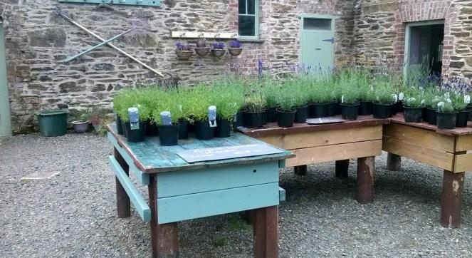 Wexford Lavender Farm Courtyard